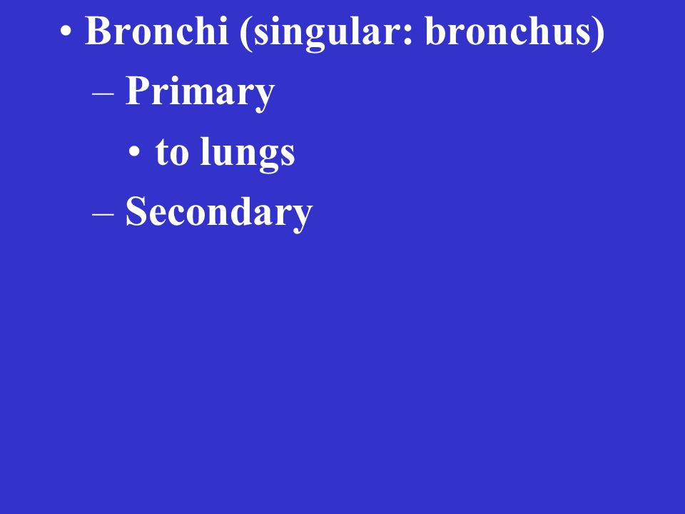 Bronchi (singular: bronchus) – Primary to lungs – Secondary