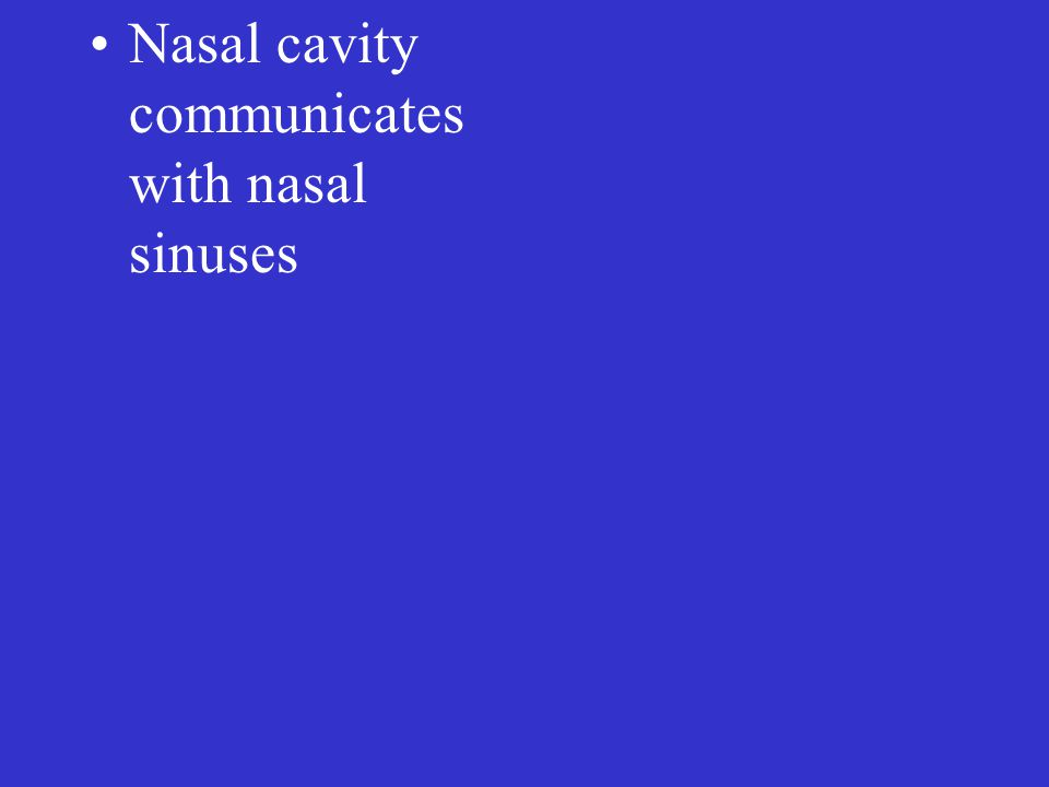 Nasal cavity communicates with nasal sinuses