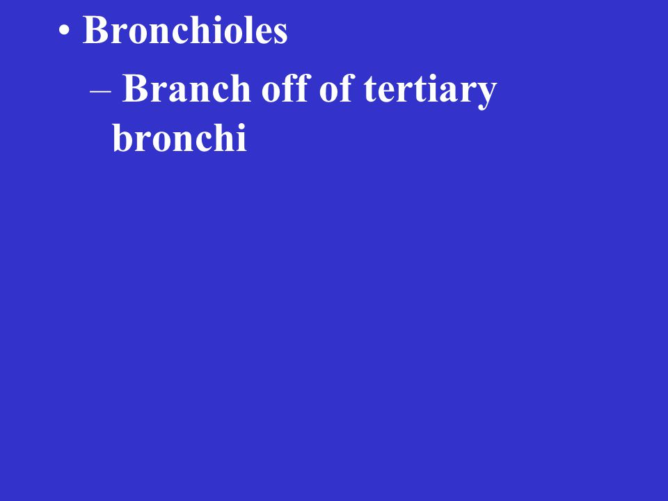 – Branch off of tertiary bronchi
