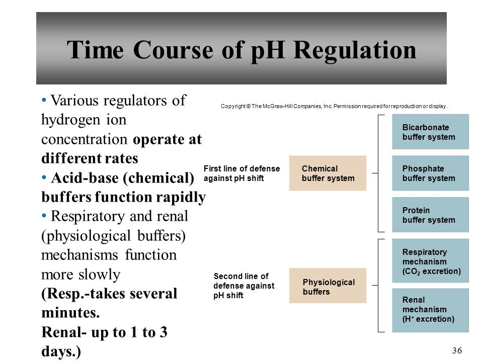 36 Various regulators of hydrogen ion concentration operate at different rates Acid-base (chemical) buffers function rapidly Respiratory and renal (physiological buffers) mechanisms function more slowly (Resp.-takes several minutes.