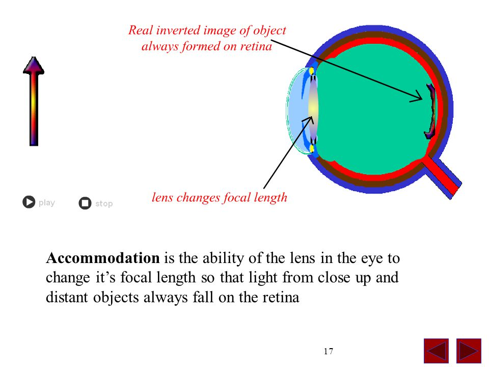 17 Accommodation is the ability of the lens in the eye to change it's focal length so that light from close up and distant objects always fall on the retina