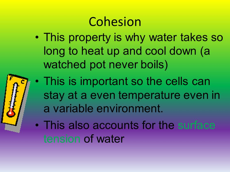 Cohesion This property is why water takes so long to heat up and cool down (a watched pot never boils) This is important so the cells can stay at a even temperature even in a variable environment.