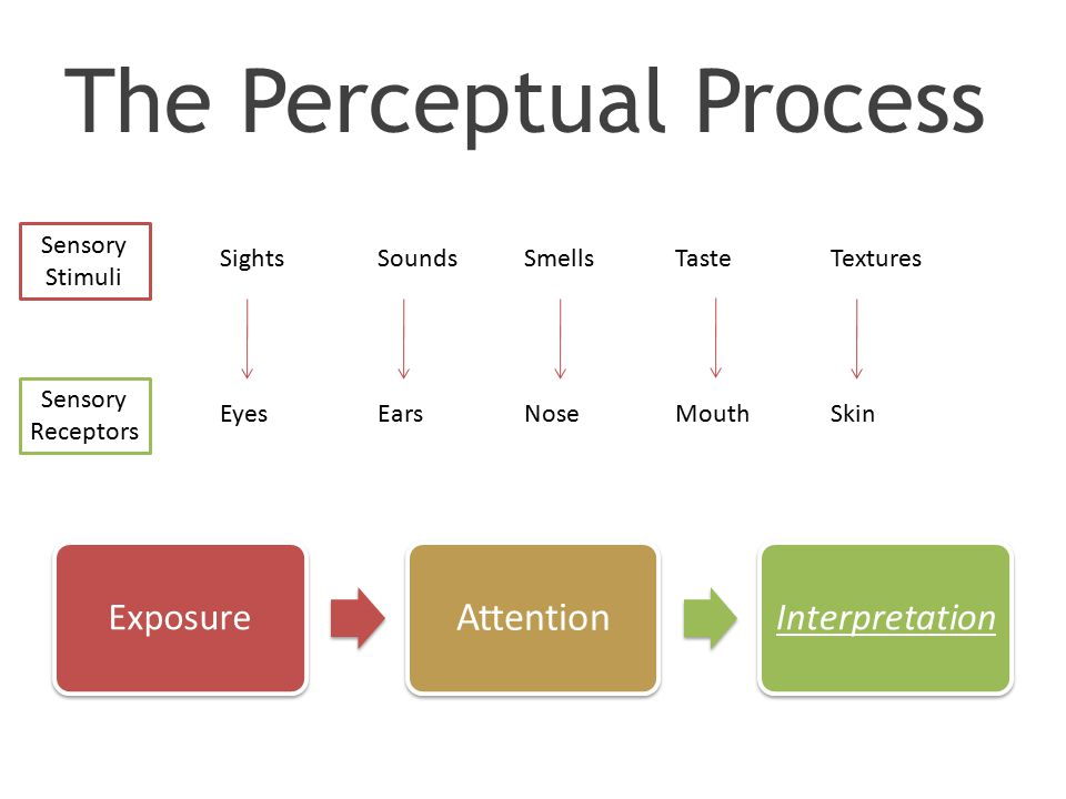 The Perceptual Process Exposure Attention Interpretation Sensory Stimuli Sensory Receptors SightsSoundsSmellsTasteTextures EyesEarsNoseMouthSkin