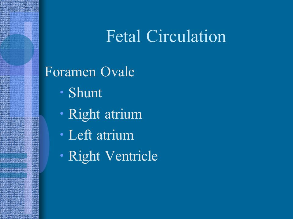 Fetal Circulation Foramen Ovale  Shunt  Right atrium  Left atrium  Right Ventricle