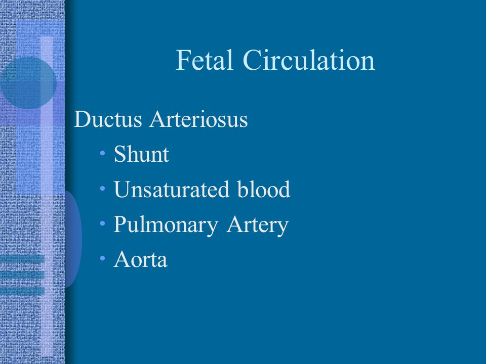 Fetal Circulation Ductus Arteriosus  Shunt  Unsaturated blood  Pulmonary Artery  Aorta