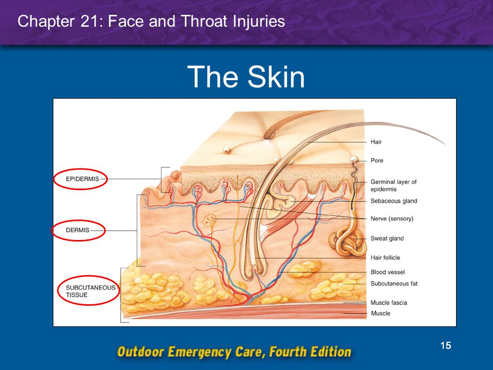 Chapter 21: Face and Throat Injuries 15 The Skin