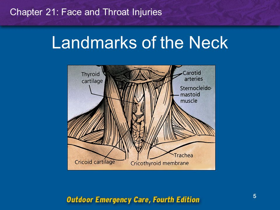 Chapter 21: Face and Throat Injuries 5 Landmarks of the Neck