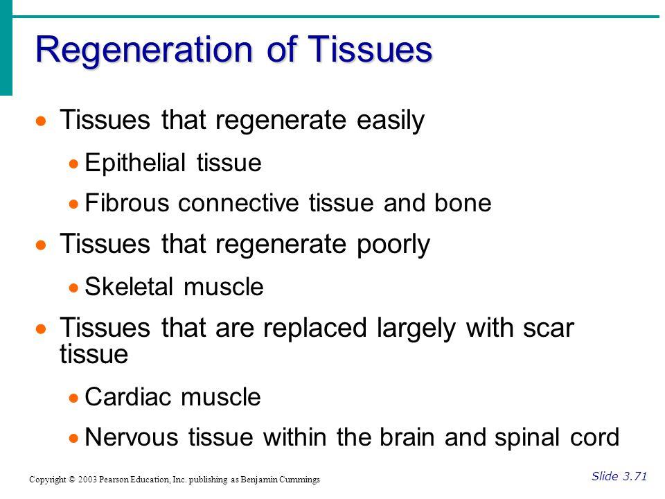 Regeneration of Tissues Slide 3.71 Copyright © 2003 Pearson Education, Inc.