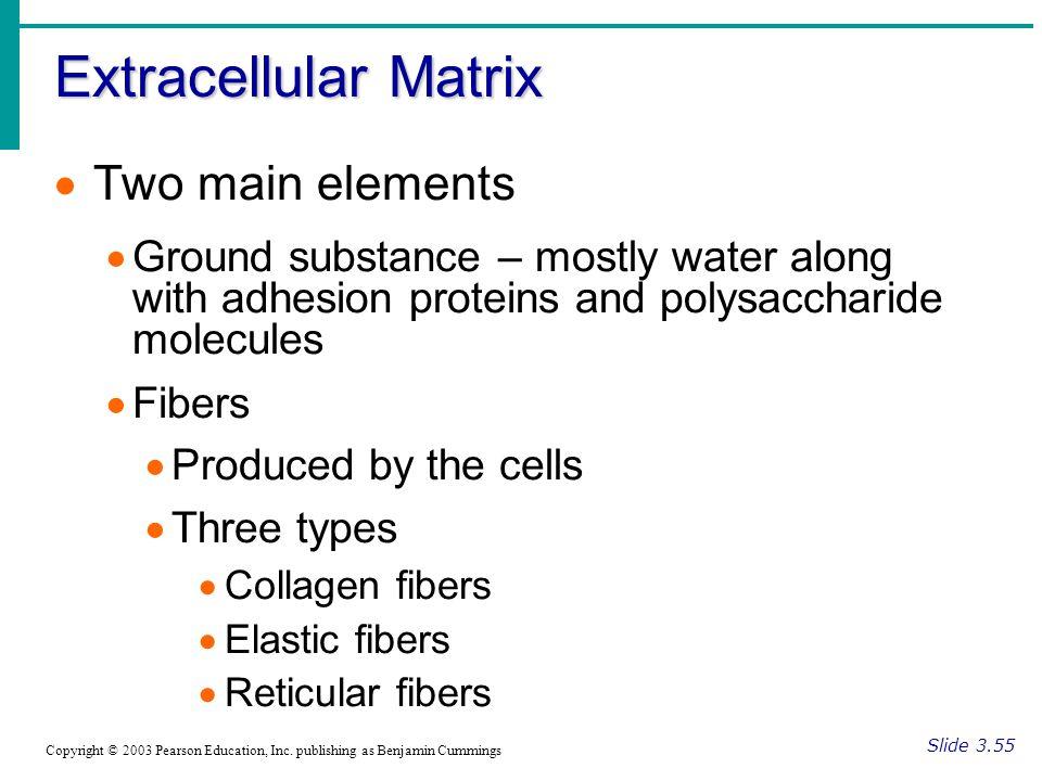 Extracellular Matrix Slide 3.55 Copyright © 2003 Pearson Education, Inc.