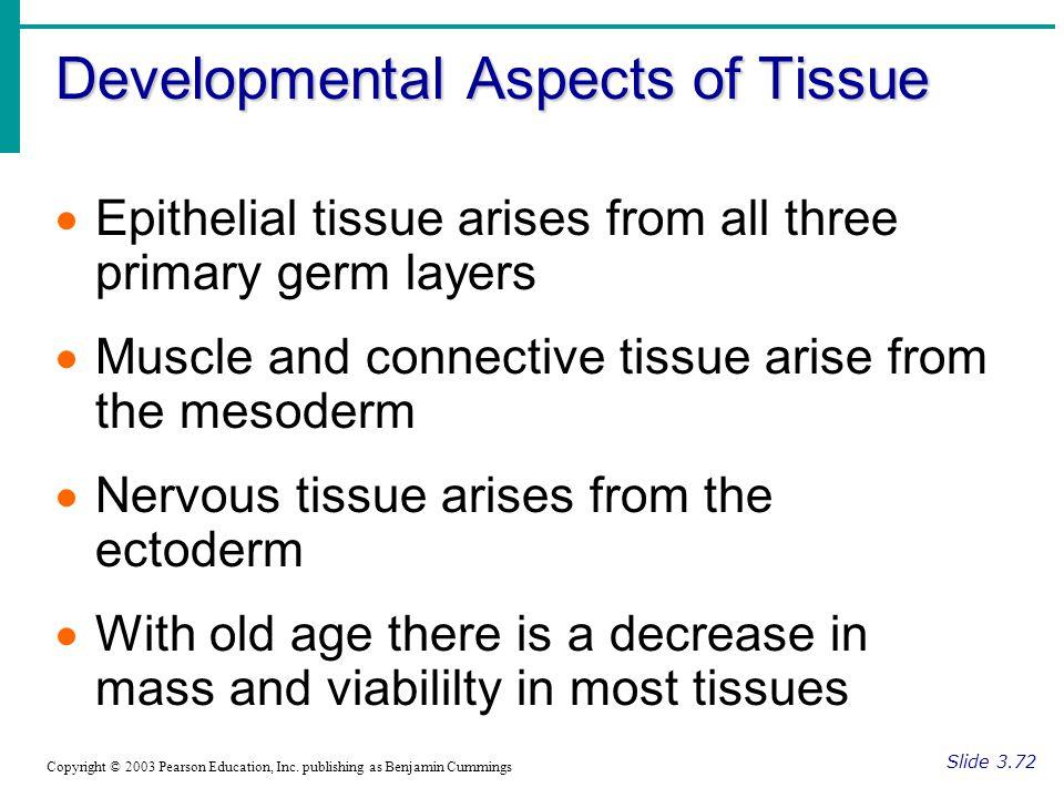 Developmental Aspects of Tissue Slide 3.72 Copyright © 2003 Pearson Education, Inc.