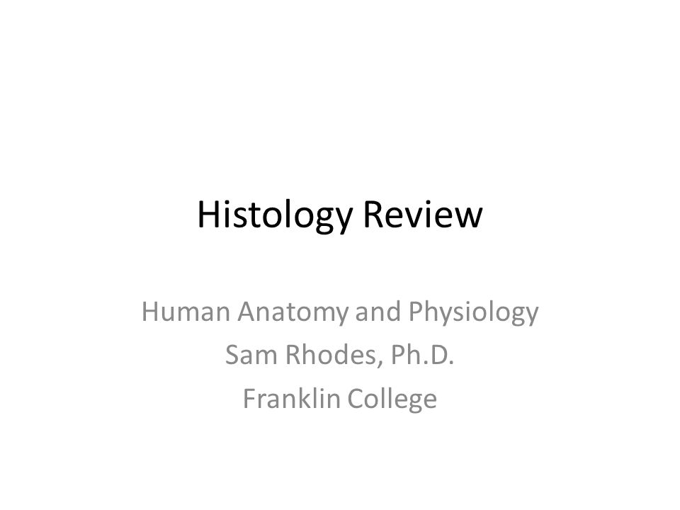 Histology Review Human Anatomy and Physiology Sam Rhodes, Ph.D ...