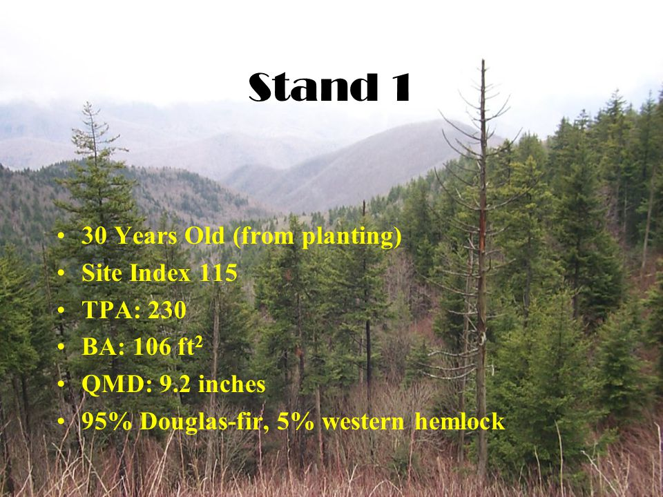 Stand 1 30 Years Old (from planting) Site Index 115 TPA: 230 BA: 106 ft 2 QMD: 9.2 inches 95% Douglas-fir, 5% western hemlock