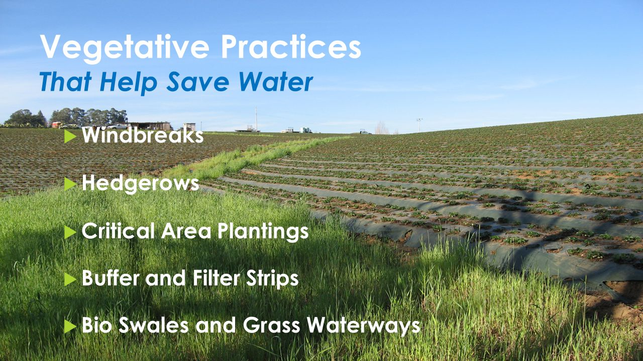 Vegetative Practices That Help Save Water  Windbreaks  Hedgerows  Critical Area Plantings  Buffer and Filter Strips  Bio Swales and Grass Waterways