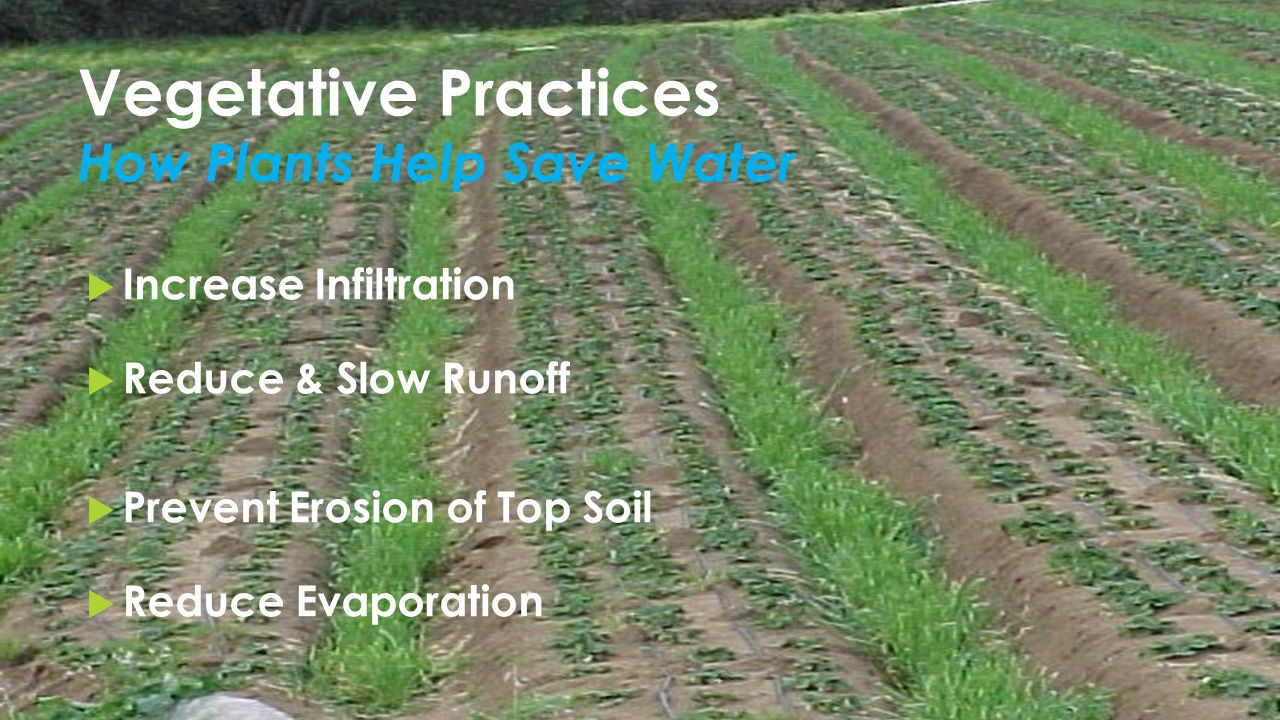 Vegetative Practices How Plants Help Save Water  Increase Infiltration  Reduce & Slow Runoff  Prevent Erosion of Top Soil  Reduce Evaporation