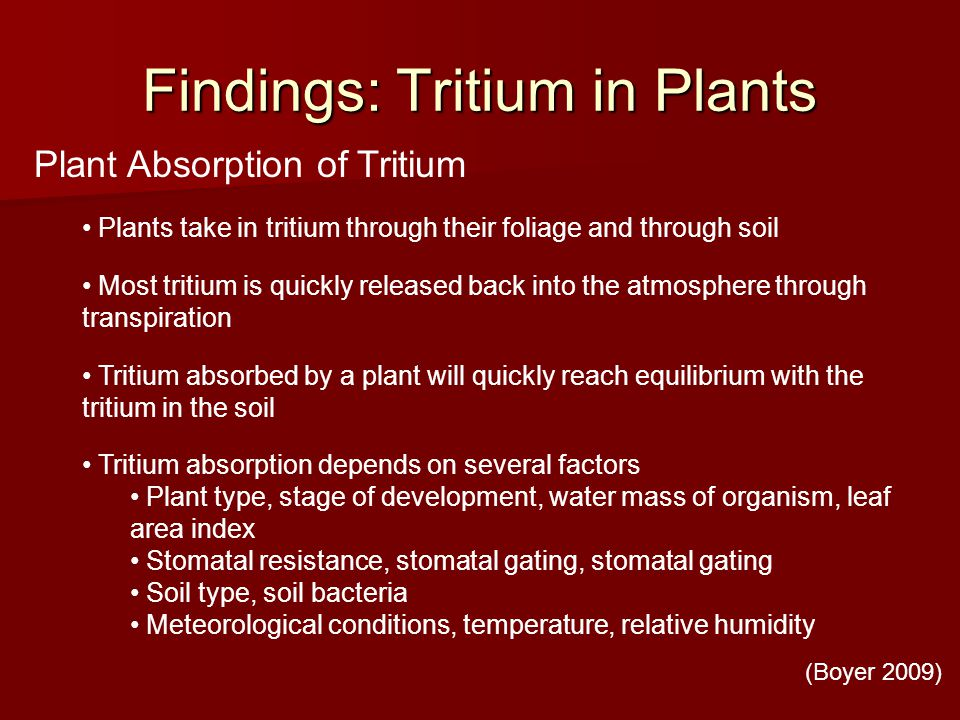 Findings: Tritium in Plants Plant Absorption of Tritium Plants take in tritium through their foliage and through soil Most tritium is quickly released back into the atmosphere through transpiration Tritium absorbed by a plant will quickly reach equilibrium with the tritium in the soil Tritium absorption depends on several factors Plant type, stage of development, water mass of organism, leaf area index Stomatal resistance, stomatal gating, stomatal gating Soil type, soil bacteria Meteorological conditions, temperature, relative humidity (Boyer 2009)