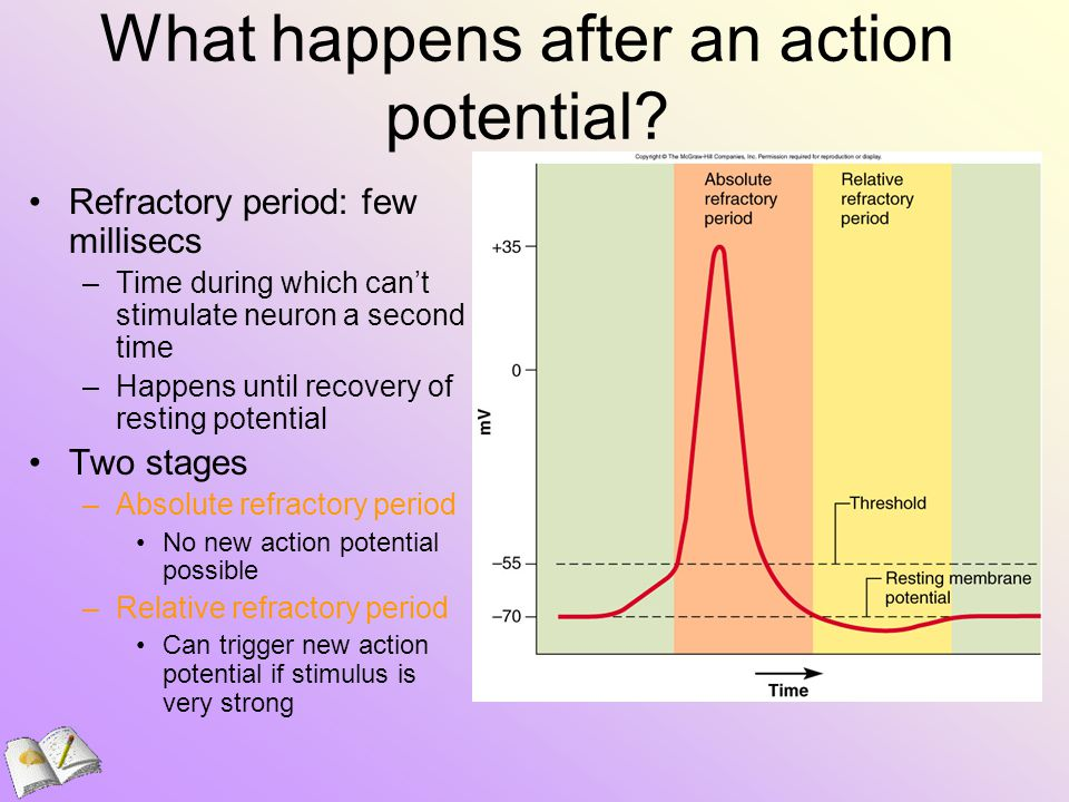 What happens after an action potential.