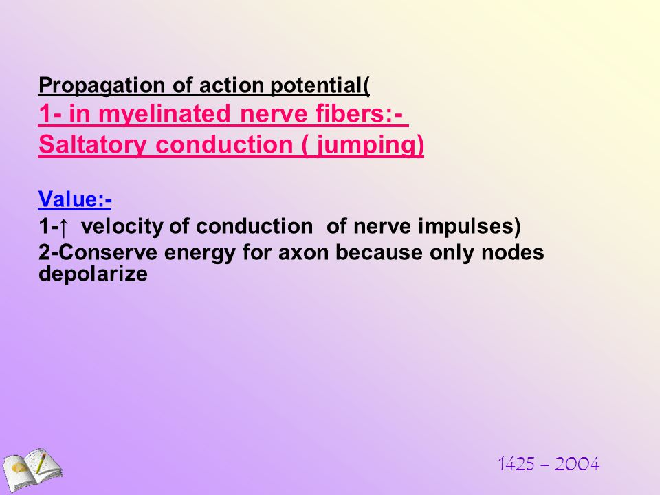1425 – 2004 Propagation of action potential( 1- in myelinated nerve fibers:- Saltatory conduction ( jumping) Value:- 1-↑ velocity of conduction of nerve impulses) 2-Conserve energy for axon because only nodes depolarize