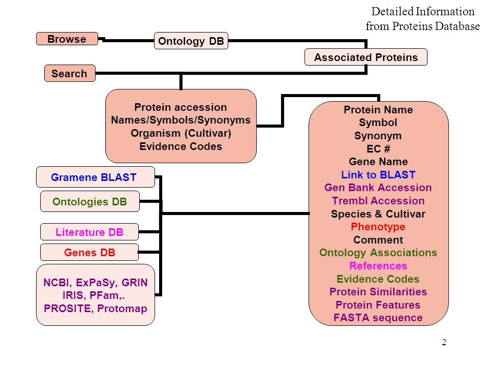 2 Ontology DB Genes DB Detailed Information from Proteins Database