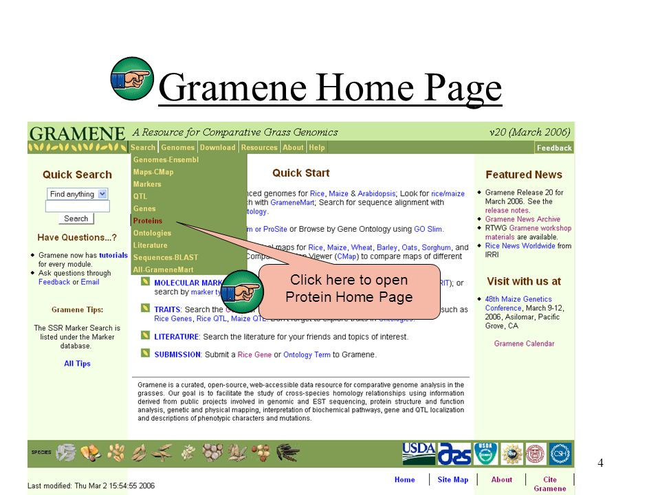 4 Gramene Home Page Click here to open Protein Home Page