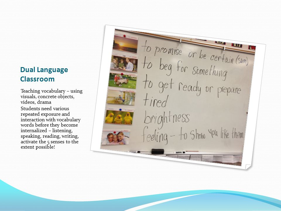 Dual Language Classroom Teaching vocabulary – using visuals, concrete objects, videos, drama Students need various repeated exposure and interaction with vocabulary words before they become internalized – listening, speaking, reading, writing, activate the 5 senses to the extent possible!