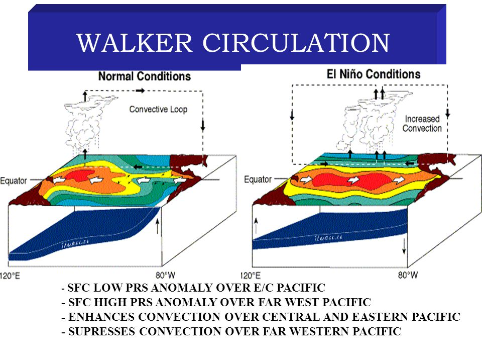 WALKER CIRCULATION - SFC LOW PRS ANOMALY OVER E/C PACIFIC - SFC HIGH PRS ANOMALY OVER FAR WEST PACIFIC - ENHANCES CONVECTION OVER CENTRAL AND EASTERN PACIFIC - SUPRESSES CONVECTION OVER FAR WESTERN PACIFIC