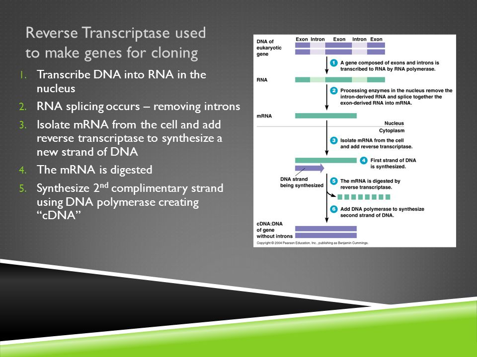 Reverse Transcriptase used to make genes for cloning 1.