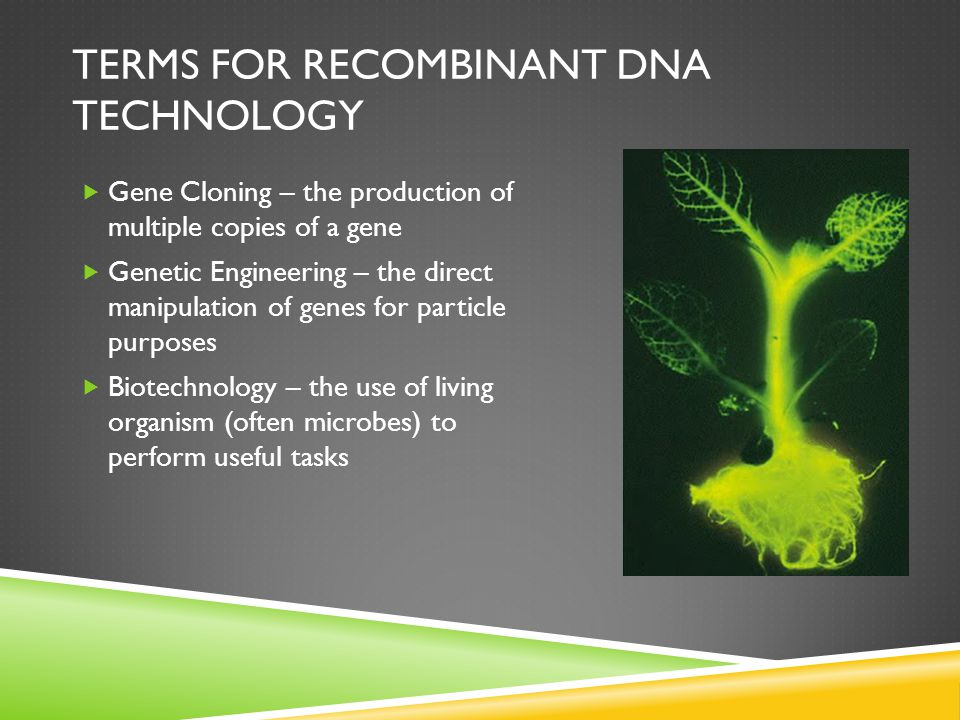 TERMS FOR RECOMBINANT DNA TECHNOLOGY  Gene Cloning – the production of multiple copies of a gene  Genetic Engineering – the direct manipulation of genes for particle purposes  Biotechnology – the use of living organism (often microbes) to perform useful tasks