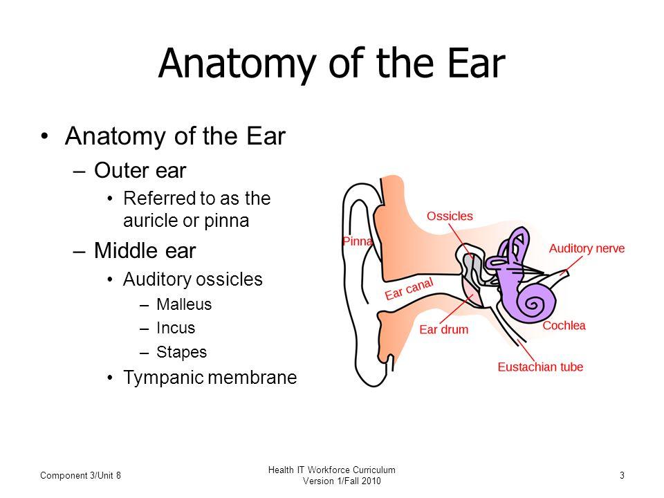 Anatomy of the ears
