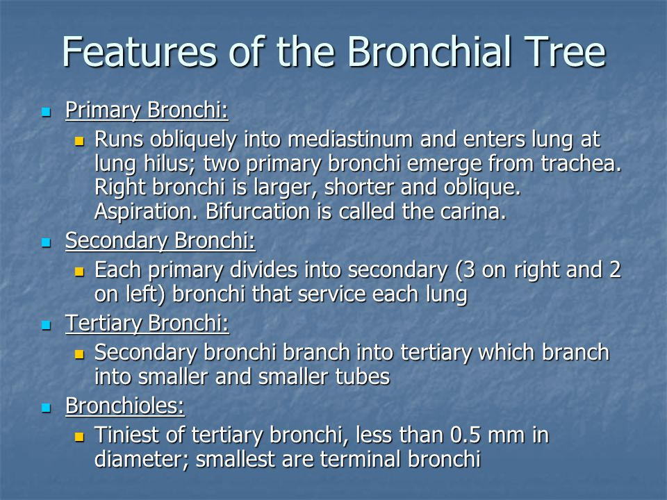 Features of the Bronchial Tree Primary Bronchi: Primary Bronchi: Runs obliquely into mediastinum and enters lung at lung hilus; two primary bronchi emerge from trachea.