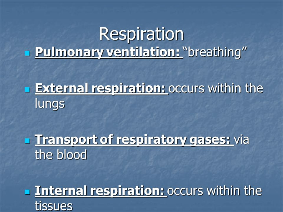 Respiration Pulmonary ventilation: breathing Pulmonary ventilation: breathing External respiration: occurs within the lungs External respiration: occurs within the lungs Transport of respiratory gases: via the blood Transport of respiratory gases: via the blood Internal respiration: occurs within the tissues Internal respiration: occurs within the tissues