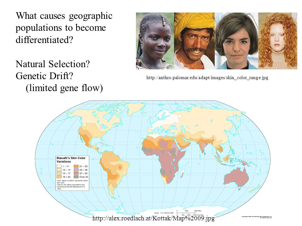 What causes geographic populations to become differentiated.