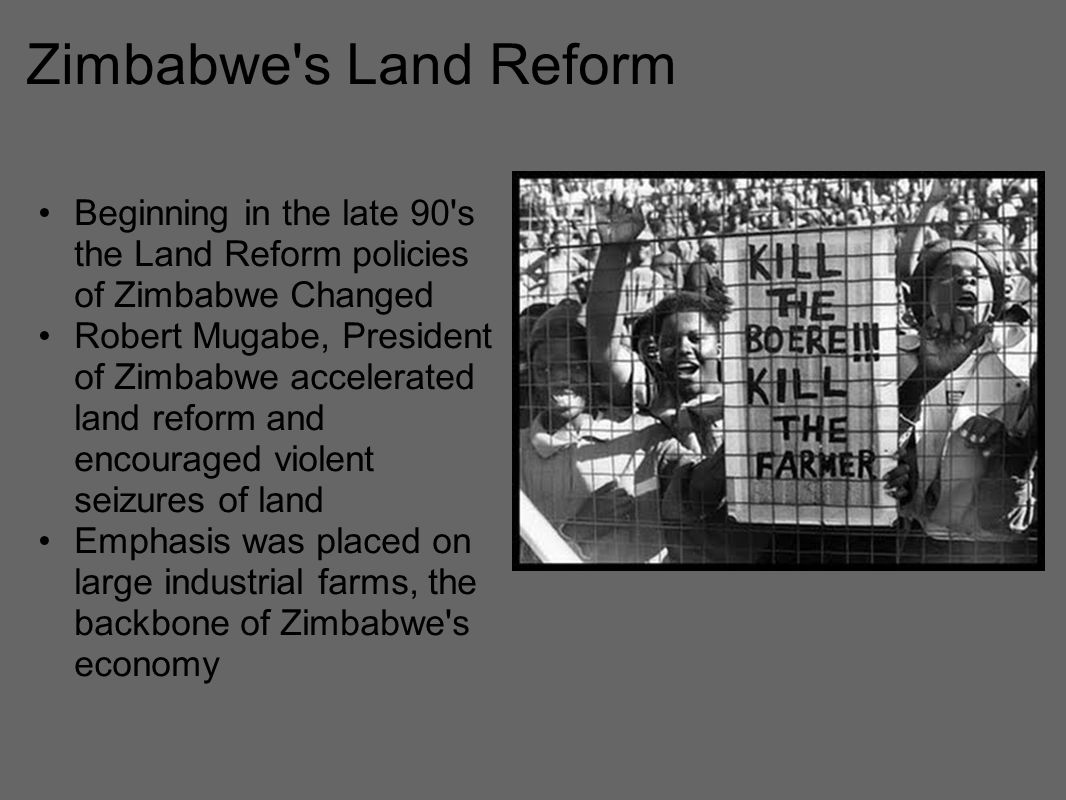 Zimbabwe s Land Reform Beginning in the late 90 s the Land Reform policies of Zimbabwe Changed Robert Mugabe, President of Zimbabwe accelerated land reform and encouraged violent seizures of land Emphasis was placed on large industrial farms, the backbone of Zimbabwe s economy