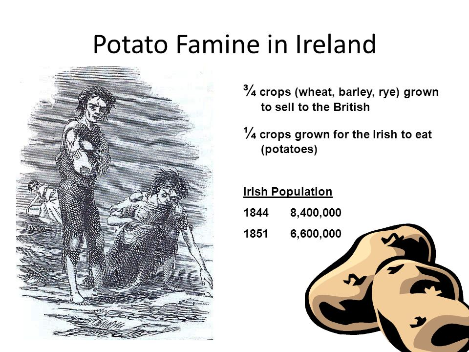 Potato Famine in Ireland ¾ crops (wheat, barley, rye) grown to sell to the British ¼ crops grown for the Irish to eat (potatoes) Irish Population 18448,400, ,600,000