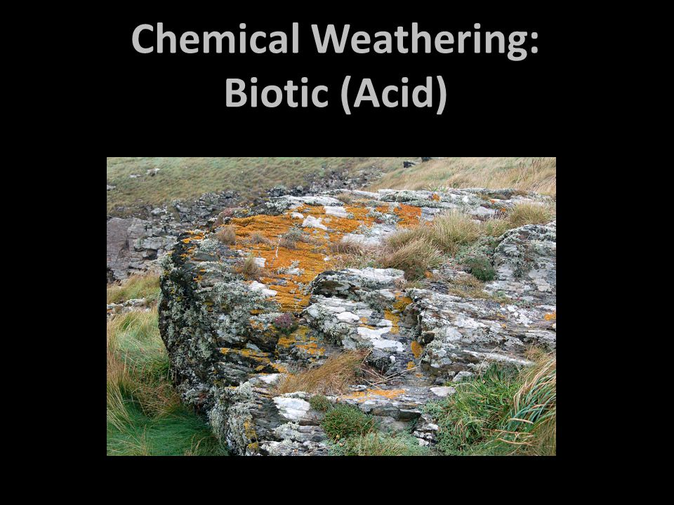Chemical Weathering: Biotic (Acid)