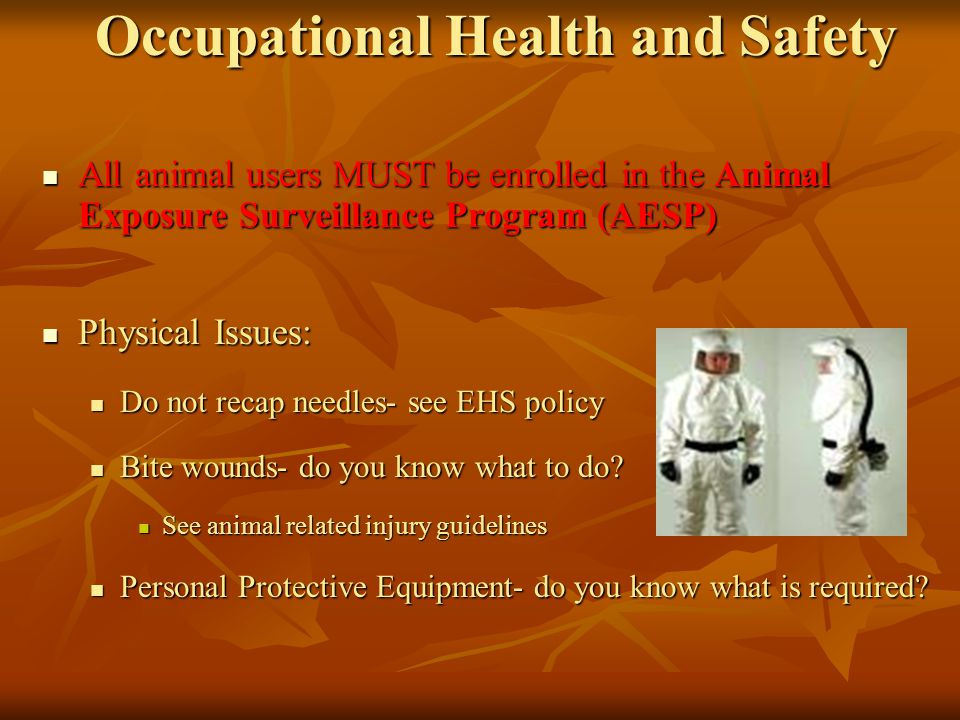 Occupational Health and Safety All animal users MUST be enrolled in the Animal Exposure Surveillance Program (AESP) All animal users MUST be enrolled in the Animal Exposure Surveillance Program (AESP) Physical Issues: Physical Issues: Do not recap needles- see EHS policy Do not recap needles- see EHS policy Bite wounds- do you know what to do.