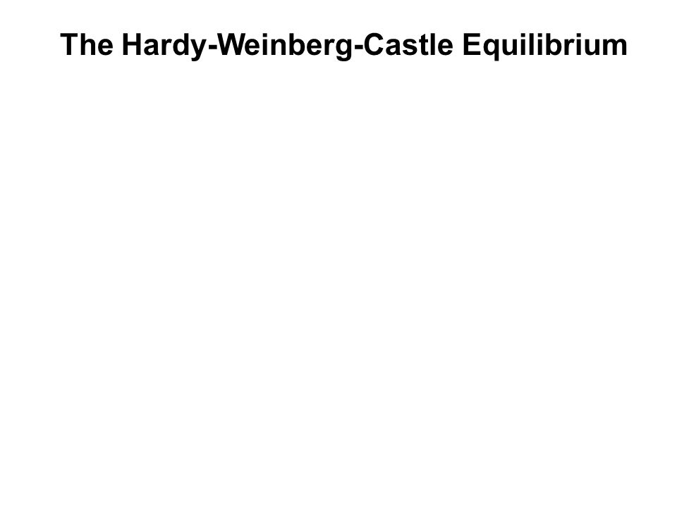 The Hardy-Weinberg-Castle Equilibrium