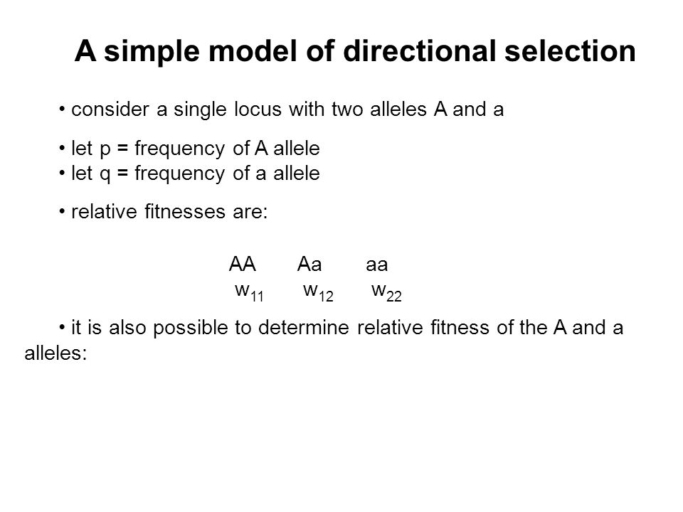 A simple model of directional selection consider a single locus with two alleles A and a let p = frequency of A allele let q = frequency of a allele relative fitnesses are: AAAaaa w 11 w 12 w 22 it is also possible to determine relative fitness of the A and a alleles: