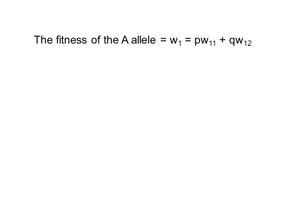 The fitness of the A allele = w 1 = pw 11 + qw 12
