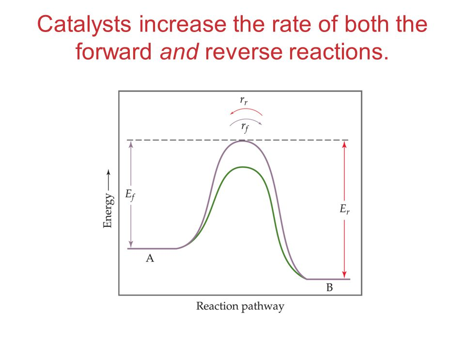 Catalysts increase the rate of both the forward and reverse reactions.