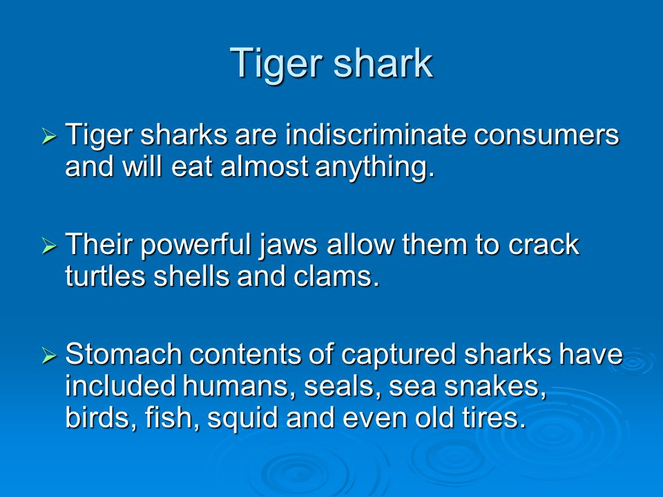 Tiger shark  Tiger sharks are indiscriminate consumers and will eat almost anything.