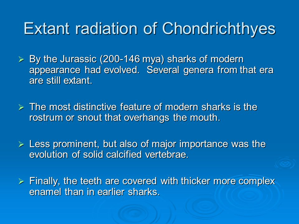 Extant radiation of Chondrichthyes  By the Jurassic ( mya) sharks of modern appearance had evolved.