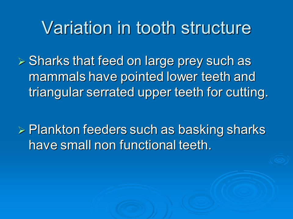Variation in tooth structure  Sharks that feed on large prey such as mammals have pointed lower teeth and triangular serrated upper teeth for cutting.