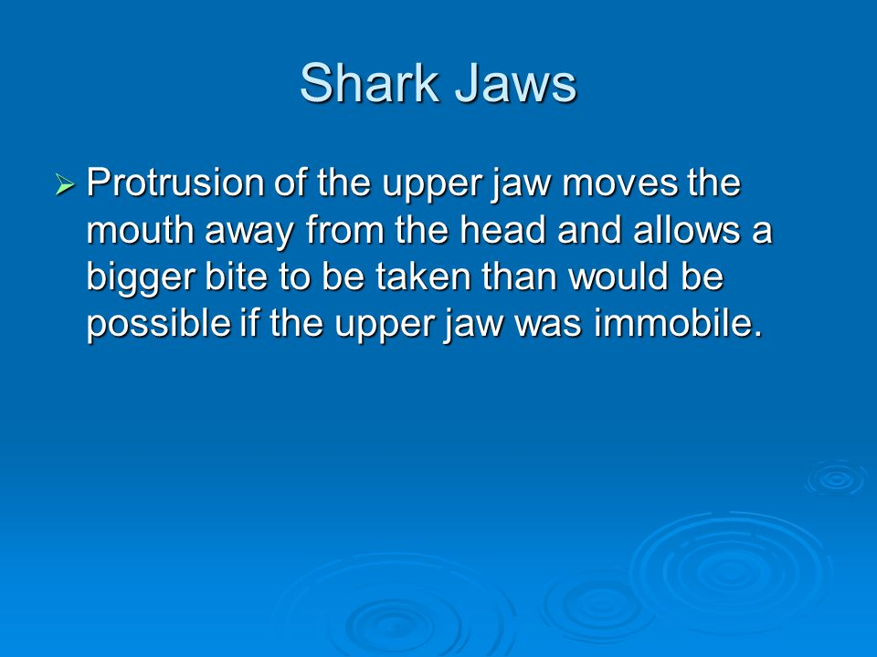 Shark Jaws  Protrusion of the upper jaw moves the mouth away from the head and allows a bigger bite to be taken than would be possible if the upper jaw was immobile.