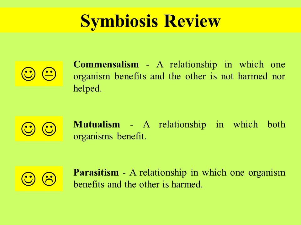 Printables Symbiotic Relationships Worksheet good buddies think about it why would a symbiotic relationship symbiosis review commensalism in which one organism benefits and the other is not