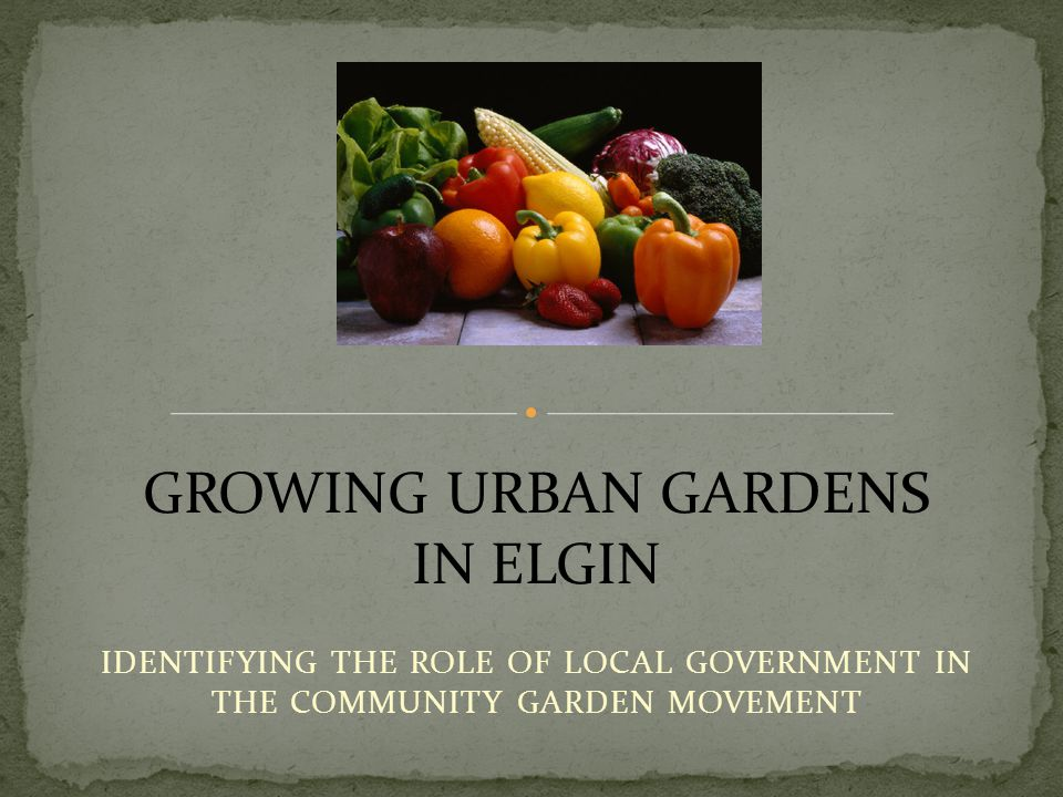 IDENTIFYING THE ROLE OF LOCAL GOVERNMENT IN THE COMMUNITY GARDEN MOVEMENT GROWING URBAN GARDENS IN ELGIN