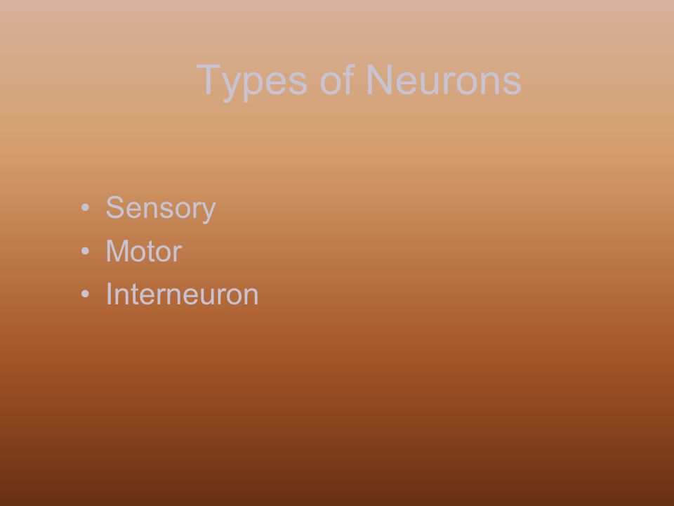 Types of Neurons Sensory Motor Interneuron