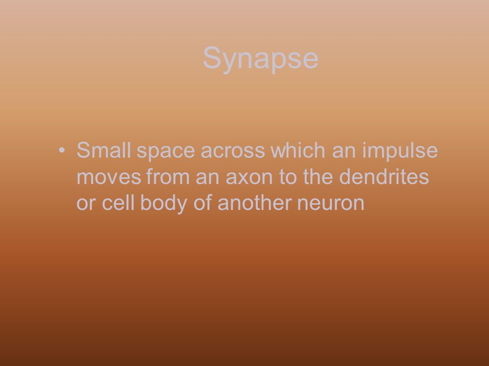 Synapse Small space across which an impulse moves from an axon to the dendrites or cell body of another neuron