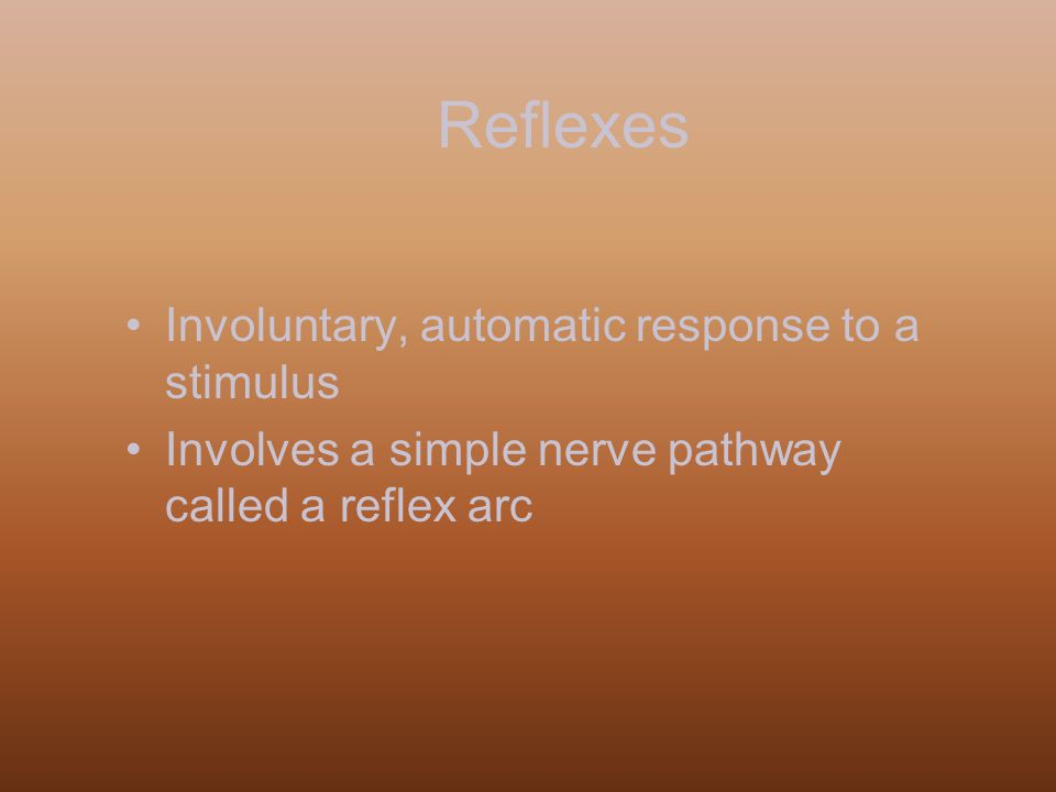 Reflexes Involuntary, automatic response to a stimulus Involves a simple nerve pathway called a reflex arc