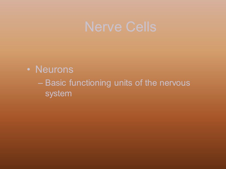 Nerve Cells Neurons –Basic functioning units of the nervous system