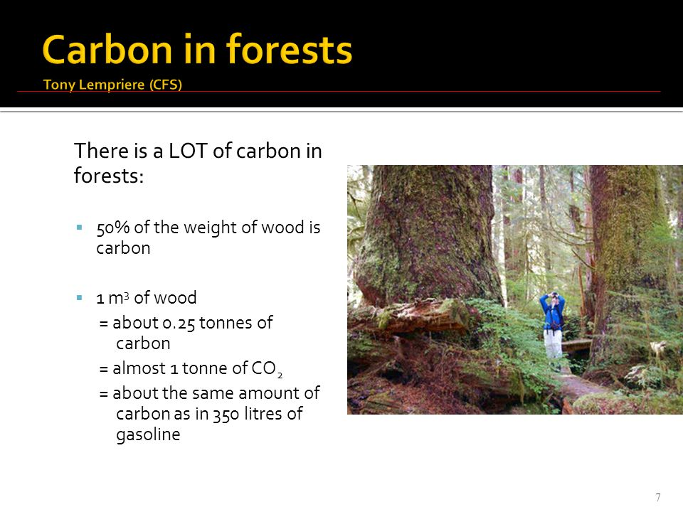 There is a LOT of carbon in forests:  50% of the weight of wood is carbon  1 m 3 of wood = about 0.25 tonnes of carbon = almost 1 tonne of CO 2 = about the same amount of carbon as in 350 litres of gasoline 7